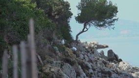 Lerinsabdij in Cannes stock footage