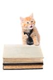 Lernbegieriges orange Kätzchen mit Bindung Lizenzfreies Stockbild
