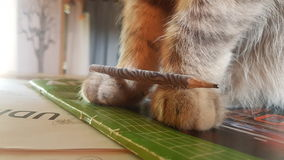 Lernen der Katze Stockfotos