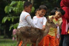 Lernen von liebevollen Tieren Stockfotografie