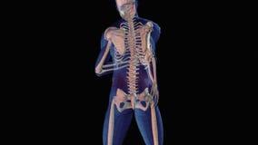 Lesão dorsal ilustração stock