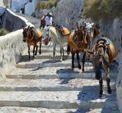 Les ânes avaient l'habitude de porter des personnes à travers le chemin raide à la baie Oia Santorini d'Amoudi photo libre de droits