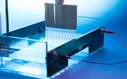 Les échantillons d'ADN de chargement sur une agarose gélifient l'électrophorèse photo libre de droits