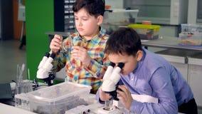 Les écoliers travaillant dans le laboratoire de science Plan rapproché 4K banque de vidéos
