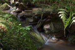 Les écoulements de courant de forêt entre les pierres moussues Longue exposition Photos libres de droits