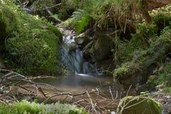 Les écoulements de courant de forêt entre les pierres moussues Longue exposition Photographie stock