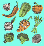 Les éléments tirés par la main réglés avec le croquis dénomment les légumes frais Différents poivrons Photos libres de droits