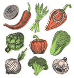 Les éléments tirés par la main réglés avec le croquis dénomment les légumes frais Différents poivrons Image libre de droits