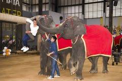 Les éléphants, conduits par des conducteurs, élèvent une femme à une exposition dans le pair Image stock