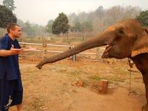 Les éléphants de alimentation dans la délivrance campent en Thaïlande Images libres de droits