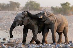 Les éléphants jouent Photographie stock libre de droits