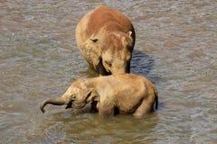 Les éléphants se baignent Photo stock