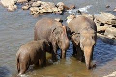 Les éléphants se baignent Image libre de droits