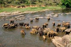 Les éléphants se baignent Photos libres de droits