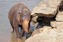 Les éléphants se baignent Images libres de droits