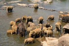 Les éléphants se baignent Photographie stock libre de droits