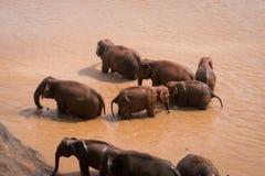 Les éléphants se baignent dans l'eau rouge photographie stock libre de droits