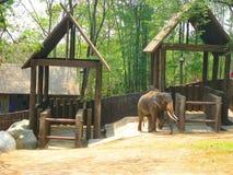 Les éléphants sont dans le zoo image stock