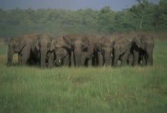 les éléphants vivent en troupe sauvage indien Images libres de droits