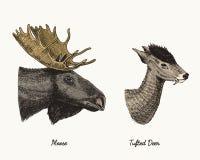 Les élans d'orignaux ou d'Eurasien, les cerfs communs tuftés dirigent l'illustration tirée par la main, les animaux sauvages grav Photos libres de droits