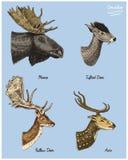 Les élans d'orignaux ou d'Eurasien, les cerfs communs tuftés, les oeufs de poisson ou la daine, illustration tirée par la main de Photo stock