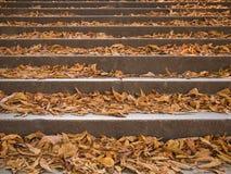Les étapes ont couvert par un escalier de feuillage coloré photos stock