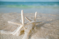 Les étoiles de mer blanches en mer ondulent le réel, la mer bleue et l'eau claire Photos libres de droits
