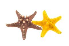 Les étoiles de mer des Caraïbes Image stock