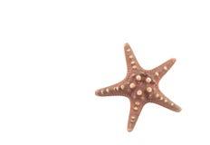 Les étoiles de mer des Caraïbes Photos stock
