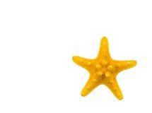 Les étoiles de mer des Caraïbes Images libres de droits