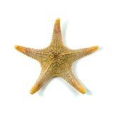 Les étoiles de mer des Caraïbes sur un fond blanc Photo libre de droits