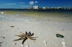 Les étoiles de mer principales de l'amoureux Photo libre de droits