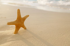 Les étoiles de mer sur le sable d'or échouent avec des vagues dans la lumière molle de coucher du soleil Images libres de droits