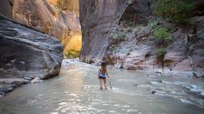 Les étroits de la rivière de Vierge, Zion National Park, Utah, Etats-Unis images libres de droits