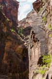 Les étroits en Zion National Park, Utah, Etats-Unis Photographie stock libre de droits
