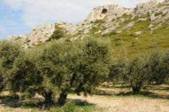 les Провансаль alpilles стоковое изображение rf