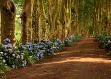 Les Açores photos libres de droits
