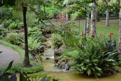 Les Açores, Furnas Images libres de droits