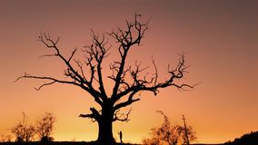 Les aan de heilige boom Stock Fotografie