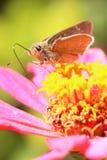 Les abeilles aiment le miel photographie stock libre de droits