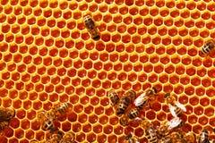 les abeilles clôturent l'image de nids d'abeilles fonctionnant vers le haut Image stock