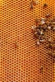 les abeilles clôturent l'image de nids d'abeilles fonctionnant vers le haut Photo stock