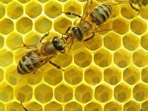 Les abeilles communiquent. Photo libre de droits