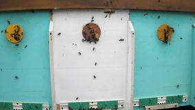 Les abeilles d'animaux banque de vidéos