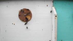 Les abeilles d'animaux clips vidéos