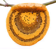 Les abeilles de travail sur le nid d'abeilles Images libres de droits