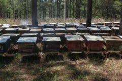 Les abeilles reviennent aux ruches pendant le sort de récolte d'abeilles volent près d'un certain nombre de ruches Image libre de droits