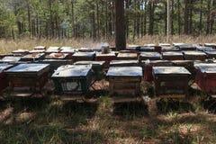 Les abeilles reviennent aux ruches pendant le sort de récolte d'abeilles volent près d'un certain nombre de ruches Photo stock
