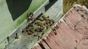 Les abeilles s'approchent de la ruche clips vidéos