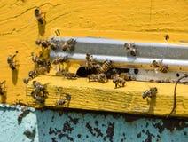 Les abeilles volent à l'entrée à la ruche Plateau de la ruche Entrée de trou à la ruche Images stock
